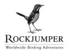 Rockjumper