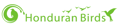 Honduran Birds