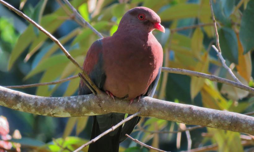 Birding La Laguna