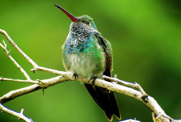 Honduran Emerald in New Spot