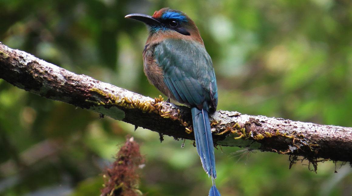 Copan Ruinas Birding Tour