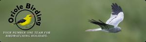 oriole birding