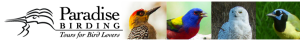 paradise-birding-web-header-new
